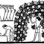 Легенда о винном сорте винограда